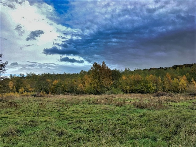Withy Wood 081120181